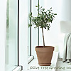 Guide to House Plants - Tips for Growing Plants Indoors