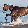 Western Austalian Racehorse Trainers Association   WARTA