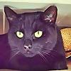 Van Cat Meow