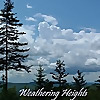 Weathering Heights | Roger Hill's weather forecasting