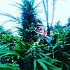 Dr. Watt's Botanist & Cannabis Cultivator