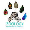 University of Cambridge | Department of Zoology