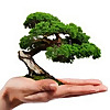 bonsai zen sc