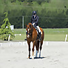 Dressage Rider Training