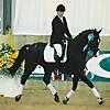 Horse & Dressage Videos