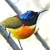 Chiangmai Birding