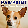 Pawprint Animal Rescue Podcast
