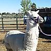Animal Antics - Fun with Rescued Animals