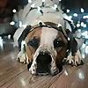 Grass Roots Rescue   Delaware Animal Rescue