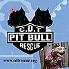 Casa del Toro Pit Bull Rescue - Blog