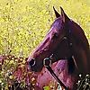 Hanaeleh Horse Rescue and Advocacy