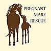 Pregnant Mare Rescue Blog