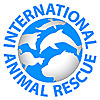 International Animal Rescue   Saving animals from suffering around the world