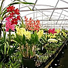 Australian Orchid Nursery Blog