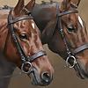 Pet Portrait Artists Melanie & Nicholas