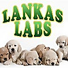 Lankas Labs | Blog