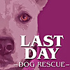 Last Day Dog Rescue