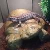 Bubs Reptiles