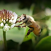 Enjoy Beekeeping