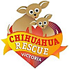 Chihuahua Rescue Victoria Dog Roll