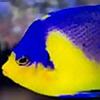 o2manyfish
