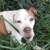 Pit Bull Galaxy - Blog