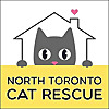 North Toronto Cat Rescue | Markham and GTA Cat Adoptions