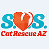 SOS Cat Rescue AZ Saving Orphan Kittens and Senior Cats in Arizona