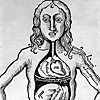 MelaneyB Anatomy