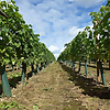Humble Yard English Wines