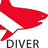 Shark Diver - Safe and sane shark diving