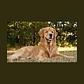 Pets Homey | Indian Pet Store Blog