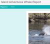 Island Adventures Whale Report