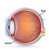 Ophthalmology Conferences