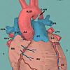 Shade Tree Cardiology