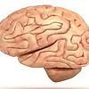 AKU Neurology Conference