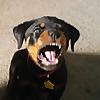 Macho the Rottweiler | YouTube