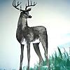 Buck Mountain Taxidermy | Taxidermy on Fish