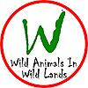 Wild Animals In Wild Lands