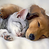 Relax Sleepy Time Lullaby Music