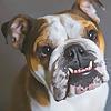 Mister Bentley the Dog