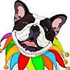 AKC French Bulldogs Umpqua Valley Kennels LLC