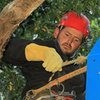 Merlin Arborist Group Blog