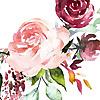 Books in Bloom   A YA Book Blog
