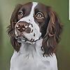 Sarahs Pet Portraits Blog