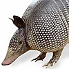 Analytical Armadillo