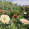 bgss.ca   Botanical Gardens of Silver Springs   Calgary Gardening Blog