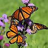 Natural Gardening | NC Gardening Blog