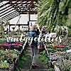 Vintage Lillies | Buffalo Lifestyle Blog