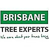 Brisbane Tree Experts Blog